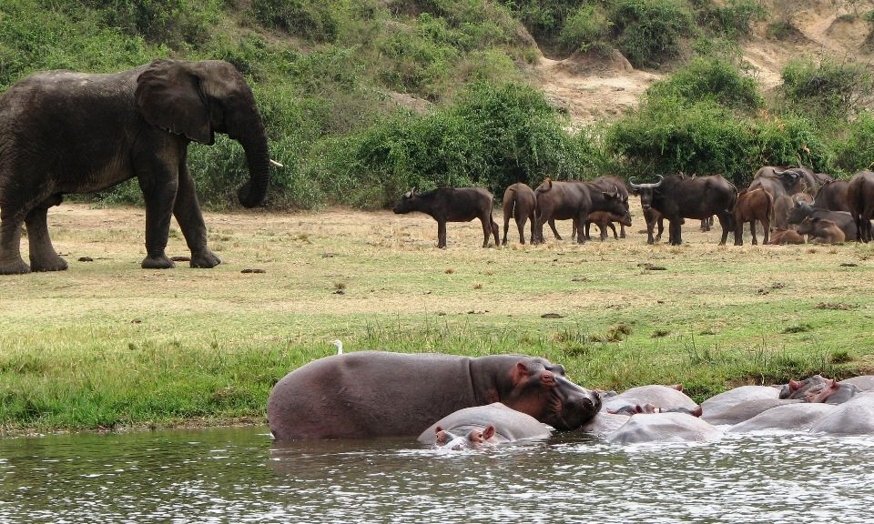 4 days best safaris at Queen-Elizabeth-National-Park