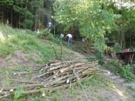 Holzen für mehr Licht auf der Weide