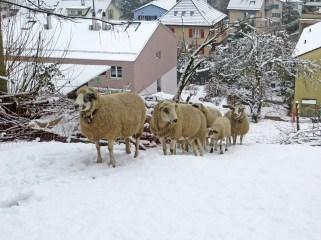 Fanden den Schnee nicht unbedingt lässig ...