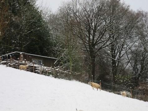 Erster Schnee auf der Rumpelhalde