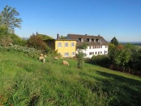 Die Heuwiese im September 2015 mit Schafbesuch
