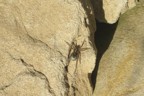 ... und Spinnen in der Steinlinse