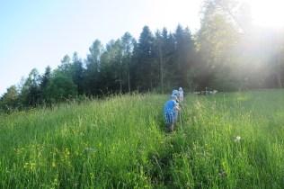 Rückzugsstreifen auf der Weide im Mai