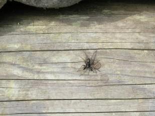 Eine Spinne sonnt sich in der Frühlingssonne am Lesesteinhaufen