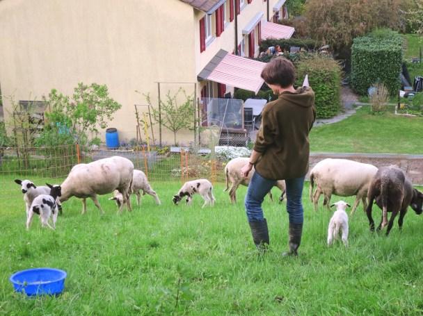 Unsere 9 Schafe