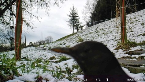 Trailcam_Rumpelhalde_Winter07_15