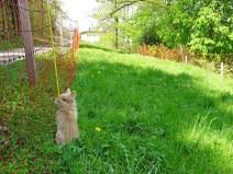 Erster Kaninchentestausflug