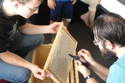 Mit einem Refraktometer wird der Wasseranteil des Honigs gemessen