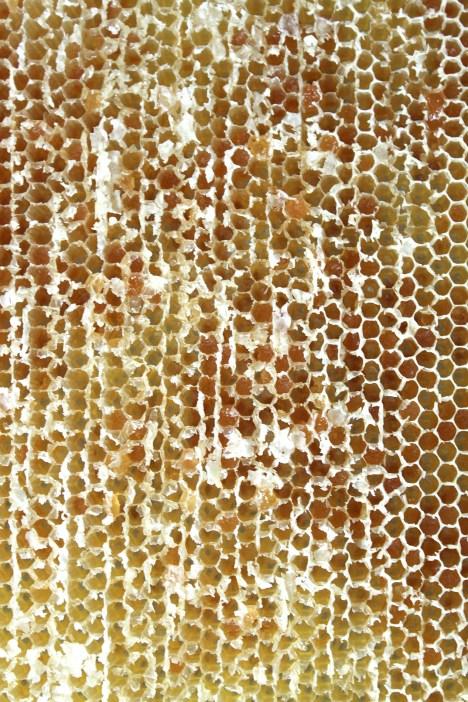 Melezitose oder Zementhonig hatten wir auch. Der geht leider nicht aus den Bienenwaben heraus