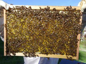 Kontrolle der Bienen