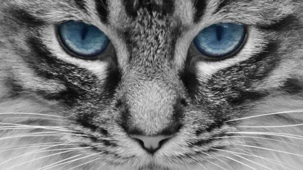 貓咪怕小黃瓜