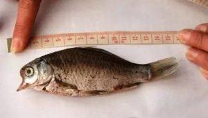 變異的魚類(圖翻攝自網路)