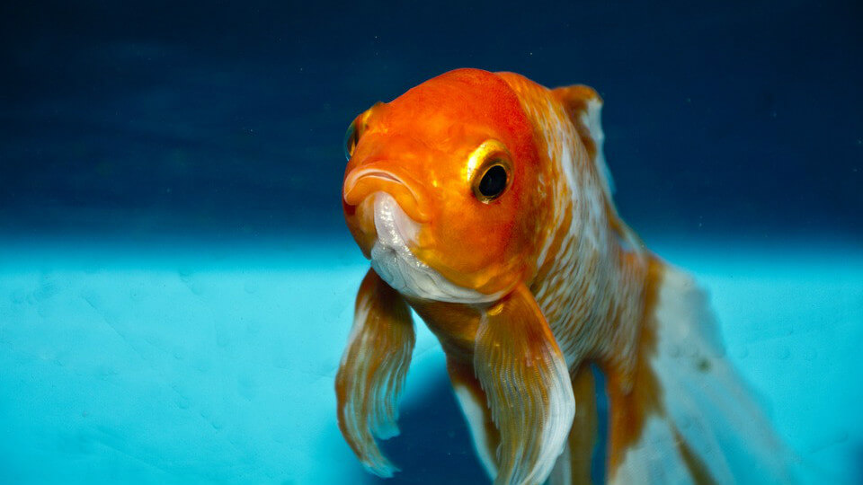 魚的記憶只有7秒