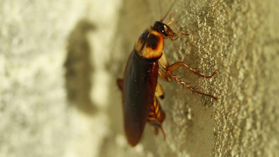 國外滅蟑螂秘方 ,整個蟑螂家族連根拔起,你相信嗎?(圖片來源/https://pixabay.com)