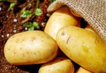 吃馬鈴薯粉會中毒