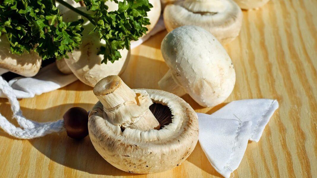 蘑菇會吸收重金屬 ,瑞士人人均壽命80多歲,就是不吃蘑菇的功勞?別再抹黑蘑菇了!(圖片來源:https://pixabay.com)