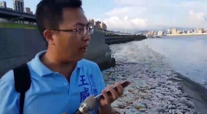 最近不要買魚了 ,因為淡水河有大量暴斃魚群?造謠的人到底存什麼心呢?