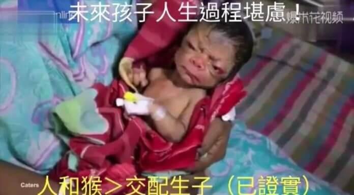 人和猴子交配生子 ?未來孩子人生過程堪慮?比較需要擔心造謠者的腦袋吧!