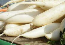 吃中藥不能吃白蘿蔔