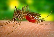 蚊子吸血會傳染愛滋病嗎(圖翻攝自網路)