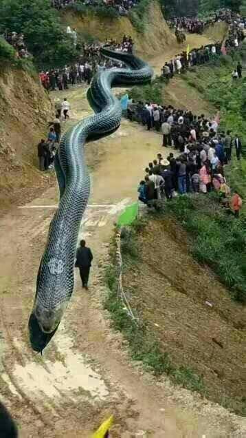 四川宜賓地震震出120公尺巨龍(圖翻攝自網路)