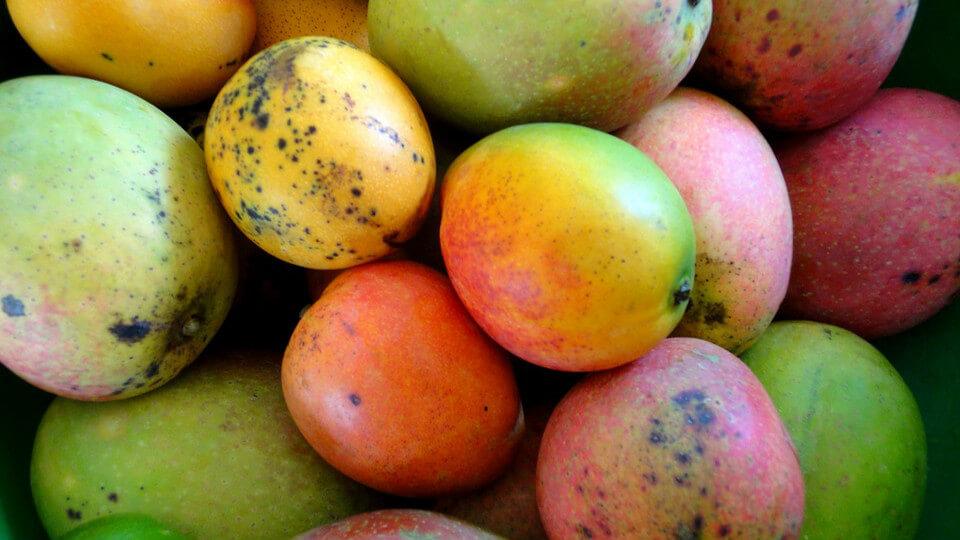芒果有黑點就不能吃(圖翻攝自網路)