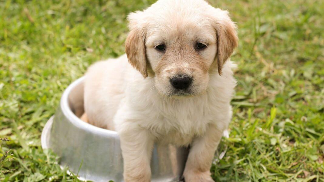 免費認養60隻純種狗 ,狗即將安樂死?假的!流傳超過十年的謠言別轉發!(圖片來源:https://pixabay.com)