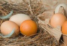 小顆的雞蛋比較營養 ,蛋殼顏色深比較好?快來檢查你信了幾個雞蛋迷思?(圖片來源:https://pixabay.com)