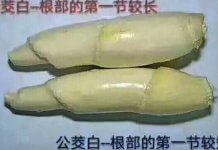 茭白筍有分公母(圖翻攝自網路)