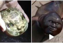 中國河南釣友釣出 人頭魚 ?假的,只存在網路謠言的世界裡