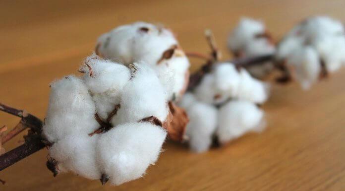 想減肥千萬別照做!網路瘋傳的 吃棉花減肥法 ,傷身又害命!(圖片來源:https://pixabay.com)