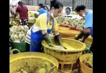 泰國榴槤染色(圖翻攝自網路)