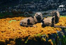 來點Sense/ 動物星球頻道 「海洋動物知多少」,探索不可思議的海洋小宇宙(圖/動物星球頻道提供)