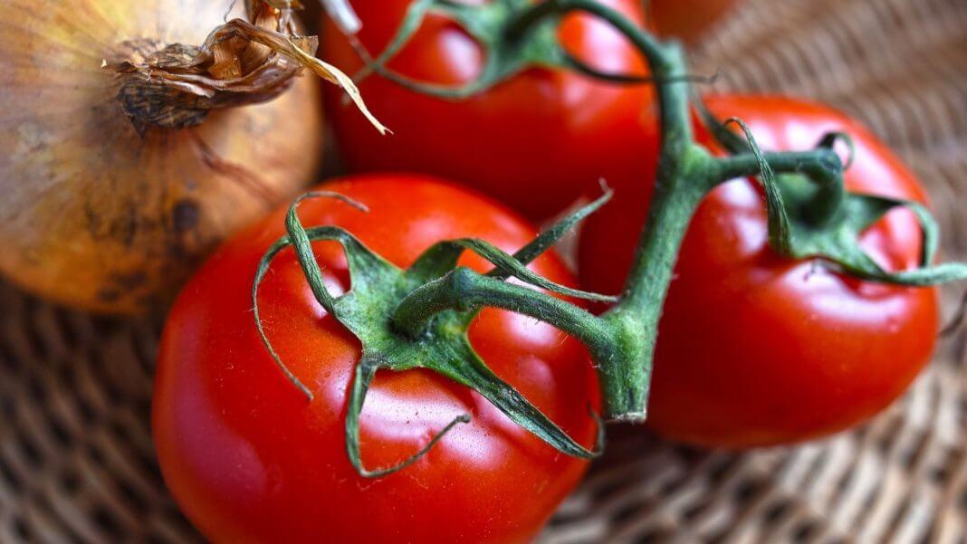 青色番茄含有龍葵鹼 ,吃了會中毒?錯!流傳許久的內容農場文別再轉發(圖片來源:https://pixabay.com)