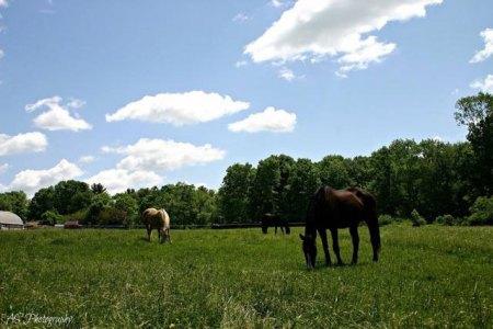 Run Away Farm Pasture Land Columbia CT