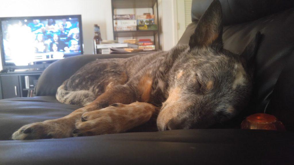 Overhauling my sleep routine dog