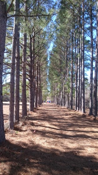 This was my favorite part. Tree line avenue