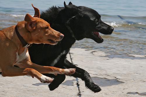 9 astuces pour courir avec son chien