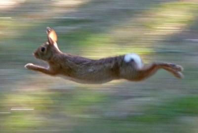 fast bunny
