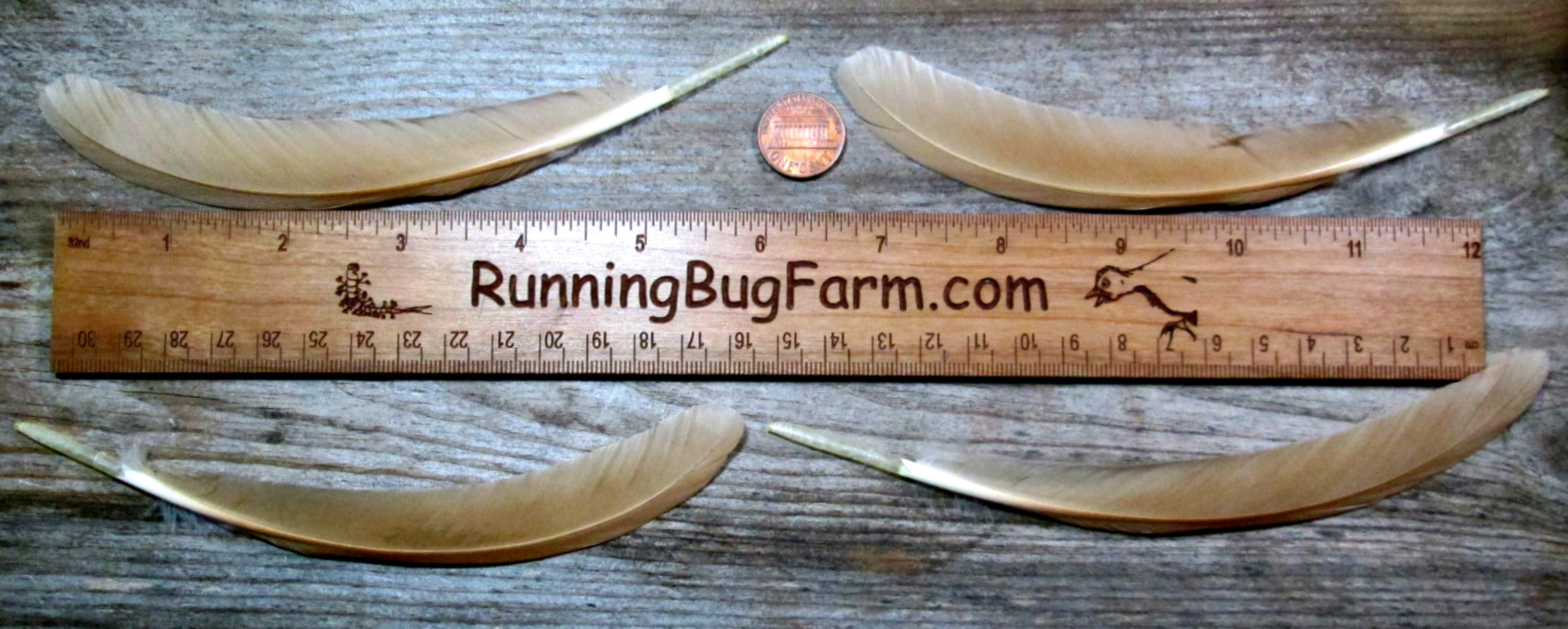 Buff Primary Right And Left Wing Feathers For Crafts From