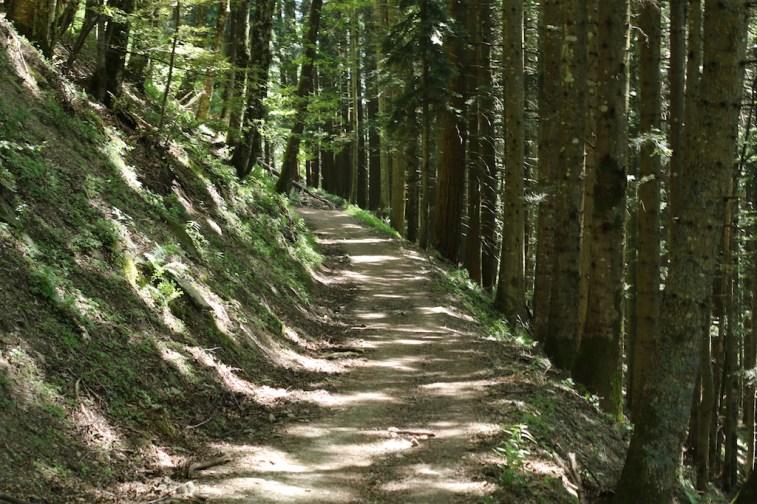trail_foreste_casentinesi_119