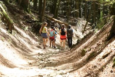 trail_foreste_casentinesi_99