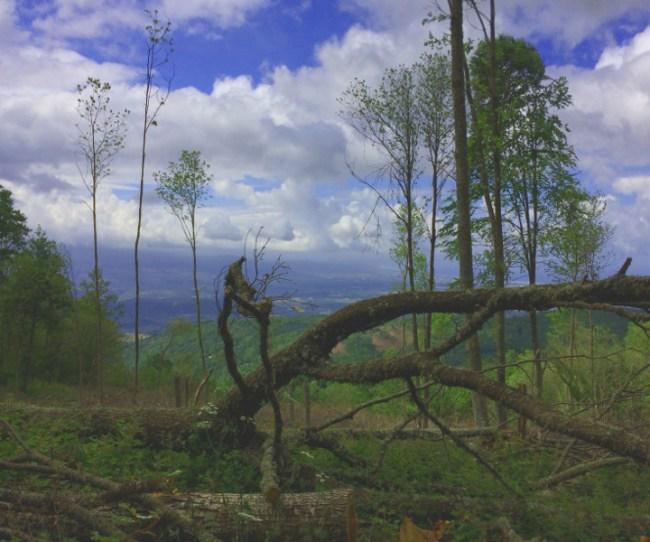 trail running calabria running glory runningglory