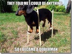 dachshundslitls