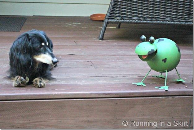 rhettfrog