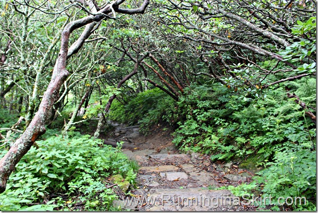 craggy_trail_2