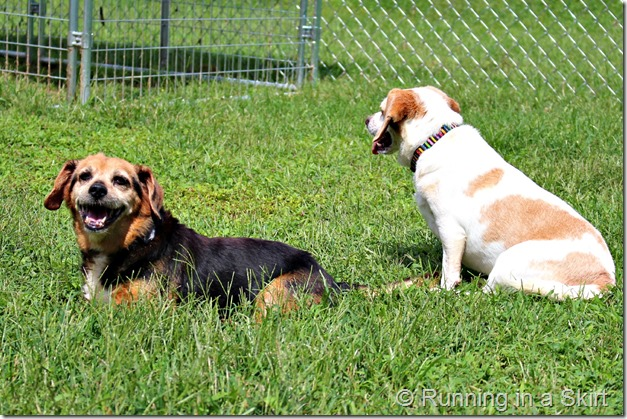 forever_farm_dogs
