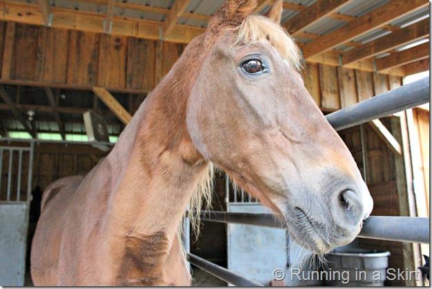 forever_farm_horse