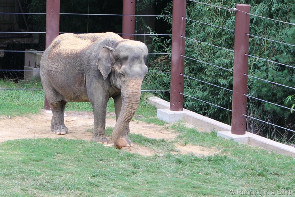 national_zoo_elephant.jpg