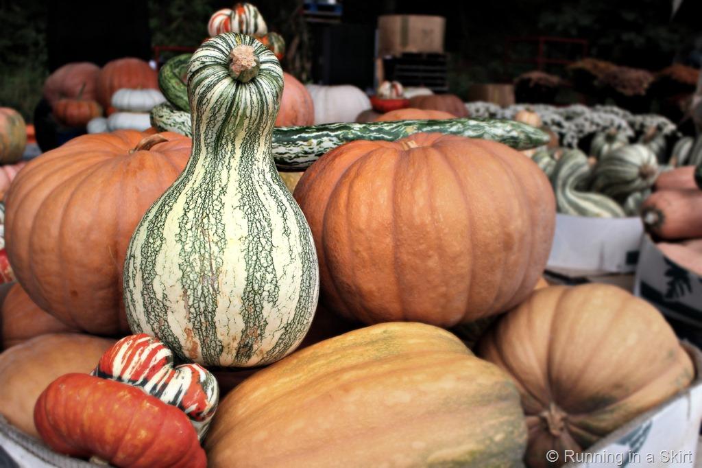 wnc_farmers_market_fall_gourds.jpg